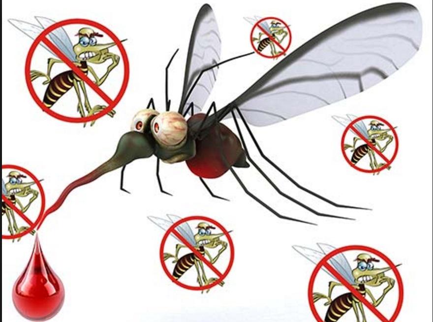 Lo stermina zanzare ecologico semplicissimo fai da te for Le zanzare non pungono i malati