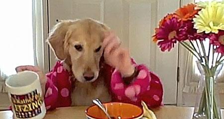 Cane che fa colazione seduto a tavola video bellissimo - Cane che mangia a tavola ...