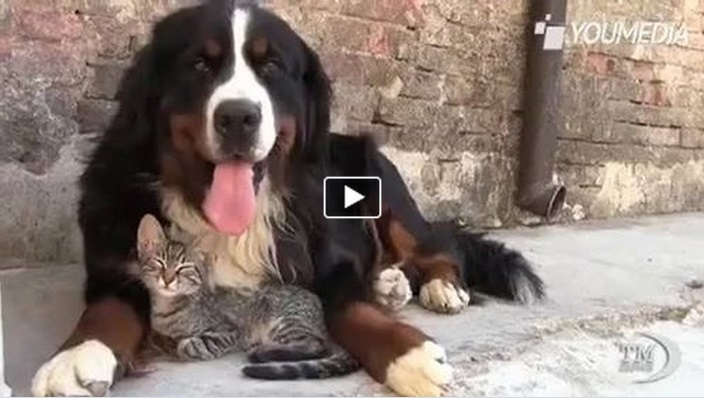 Cane E Gatto Una Volta Nemici Ora Si Coccolano Video Dolcissimo