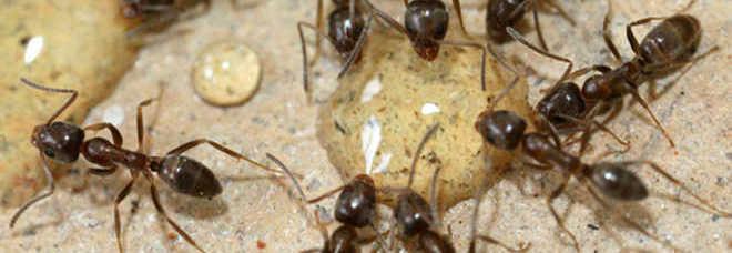 Avete le formiche dentro casa ecco i rimedi naturali per - Rimedi per le formiche in casa ...