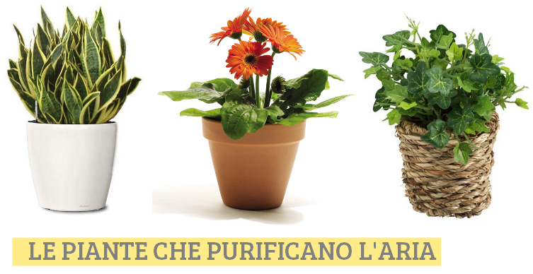 Ecco le piante che purificano l 39 aria guarda - Piante da ufficio resistenti ...