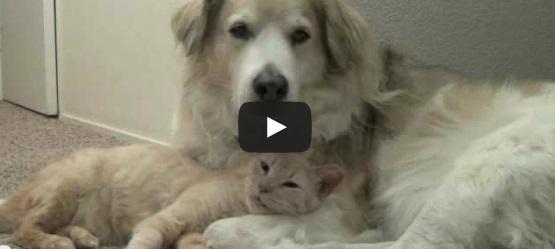 La Straordinaria Amicizia Tra Cane E Gatto Video