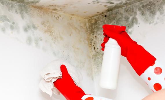 Come pulire la muffa dai muri interni