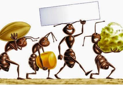 Invasione di formiche in cucina ecco i modi naturali per - Invasione formiche in casa ...