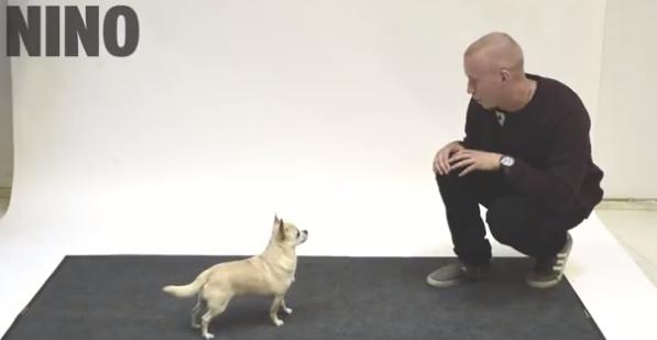 L 39 uomo imita l 39 abbaiare del cane in modo perfetto for Cane che abbaia