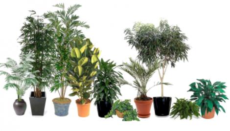 Inquinamento domestico ecco le 15 piante che depurano l 39 aria di casa - Piante che purificano l aria in casa ...
